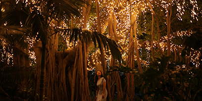 Fairy lights in the City Botanic Gardens Brisbane
